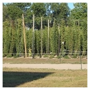 Hop Head Farms 4