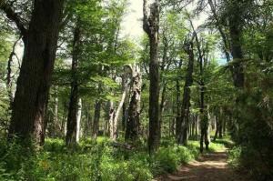 The Hangin Tree